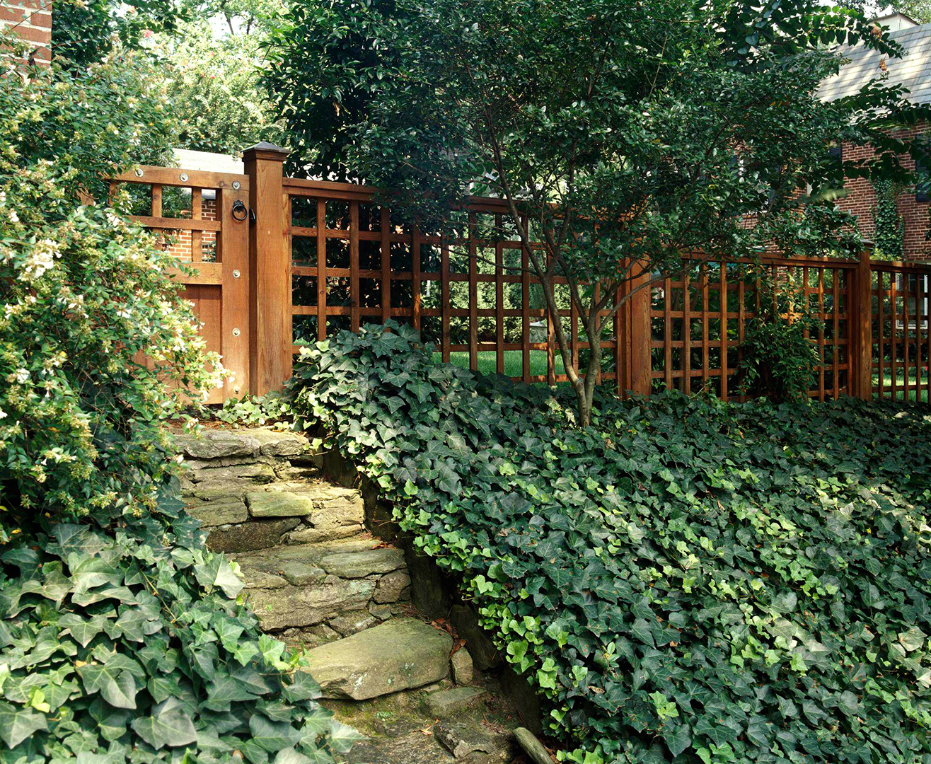 English Ivy near stone pathway and wooden fence