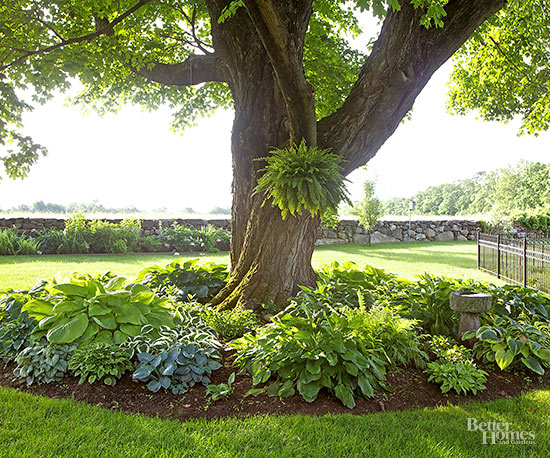 A Gardeners Guide To Hostas