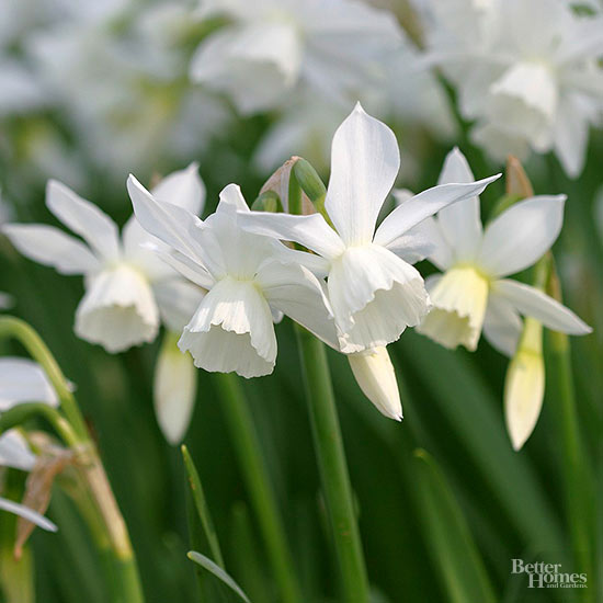 Editors' Picks: Best Spring-Blooming Bulbs