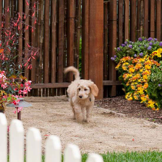 Picket fence with dog