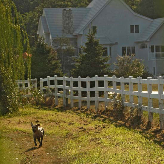 Dog and  Fence
