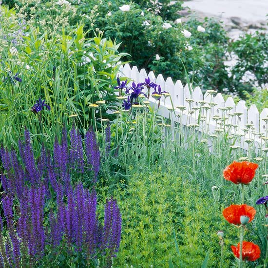 Top Plants For Seaside Gardens