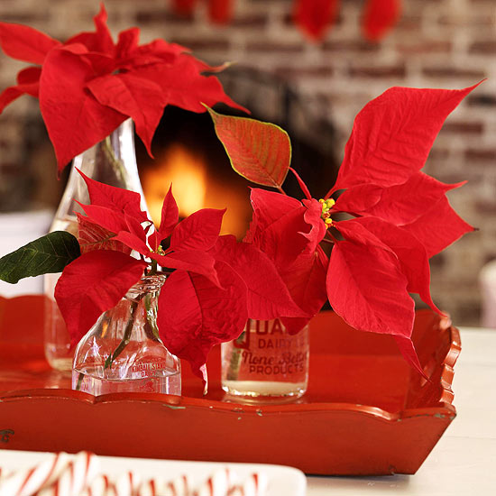 Red Poinsettias & Clear Jars