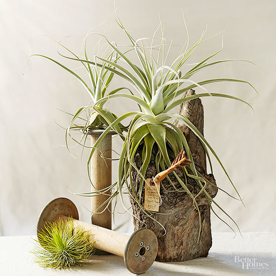Air Plant Display Ideas: Better Homes & Gardens