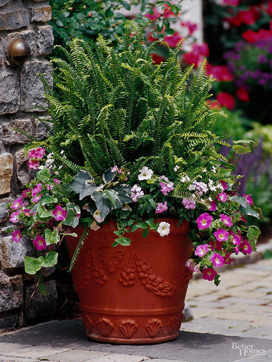 Assorted plants in terra cotta container
