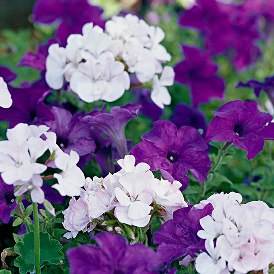 Top Annual Plant Pairings
