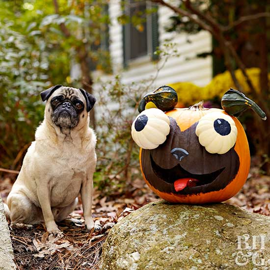 pug, dog, pumpkin