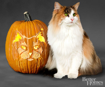 Free Pumpkin Carving Stencils of Favorite Cat Breeds