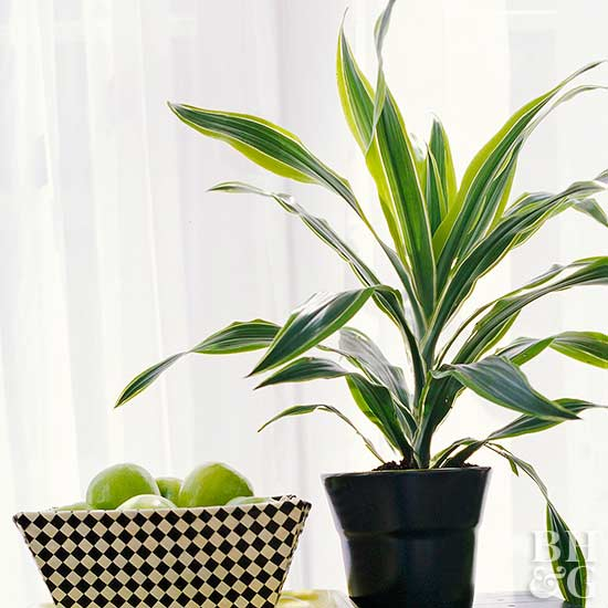 houseplants you can 39 t kill better homes gardens. Black Bedroom Furniture Sets. Home Design Ideas