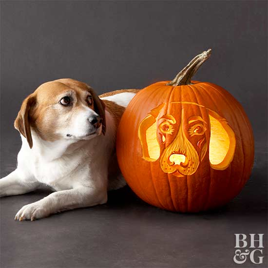 beagle with carved pumpkin