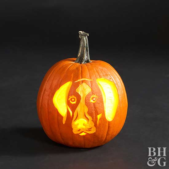 german shorthair pointer carved pumpkin