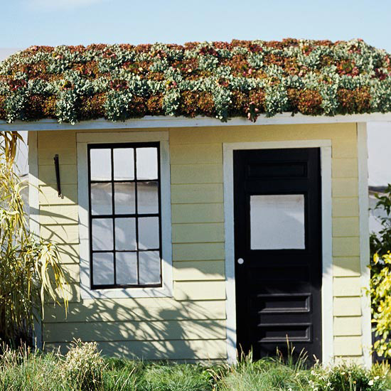 Green roof on garden shed