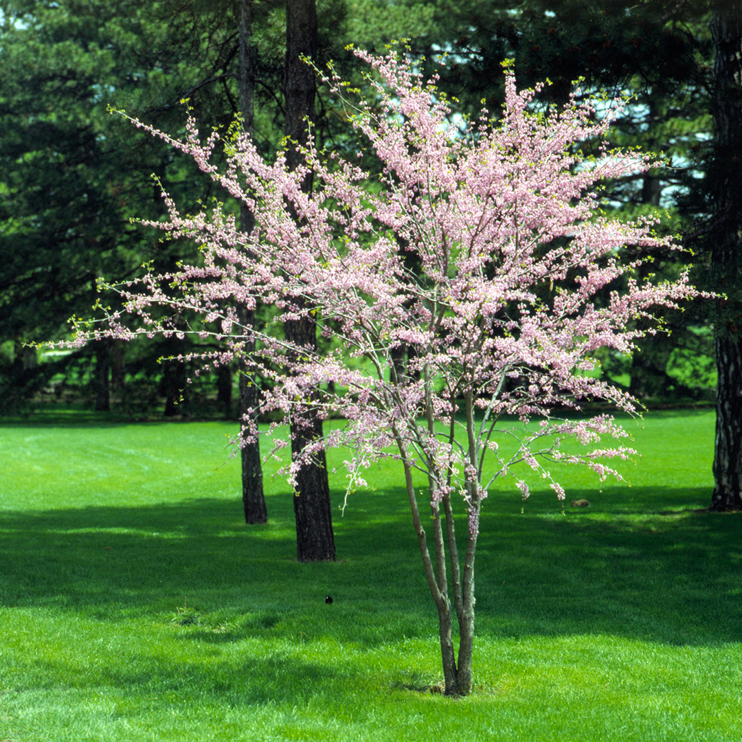 The 10 Best Flowering Trees And Shrubs For Your Yard