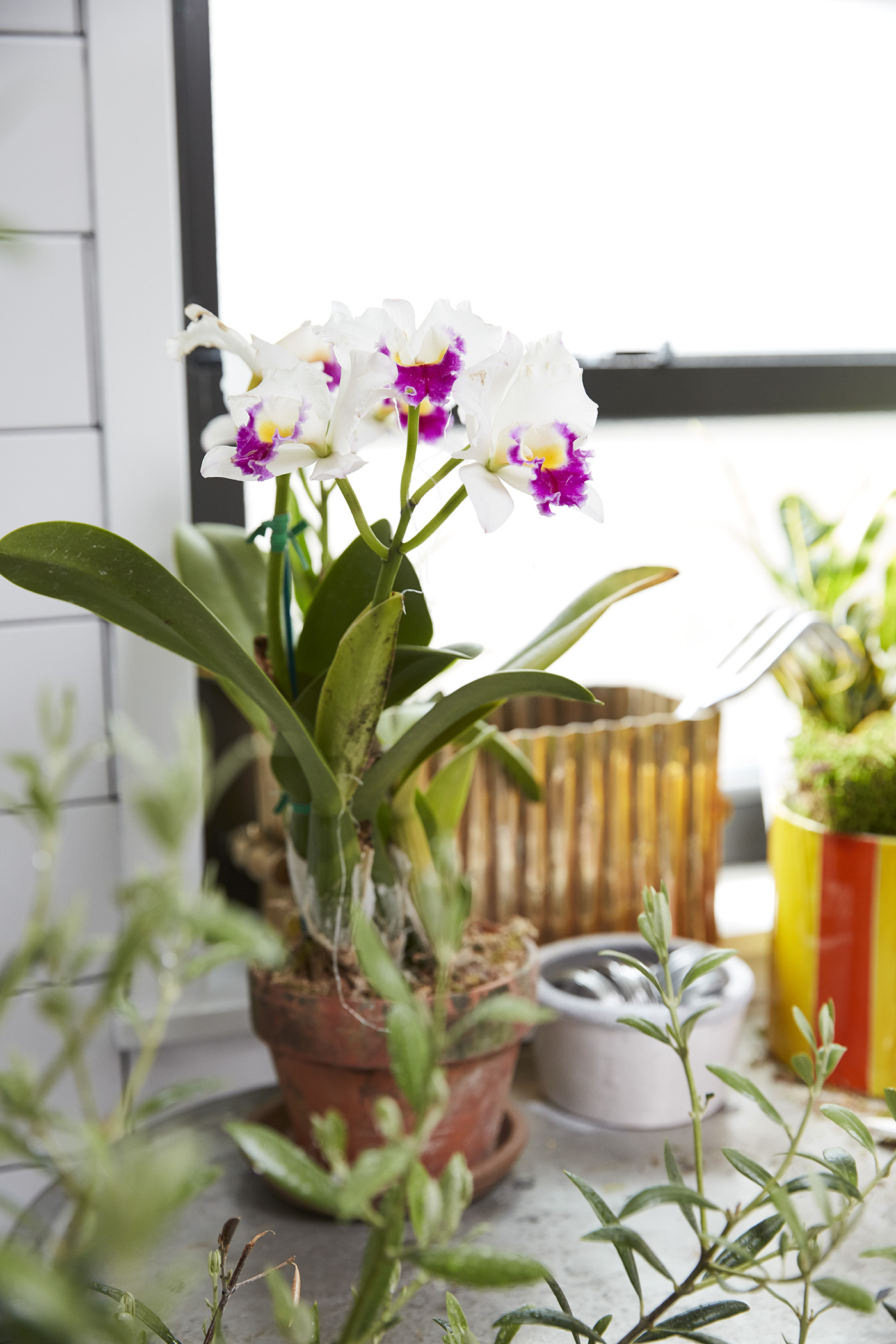 How Do I Repot My Orchid? Here's What to Know | Better ...