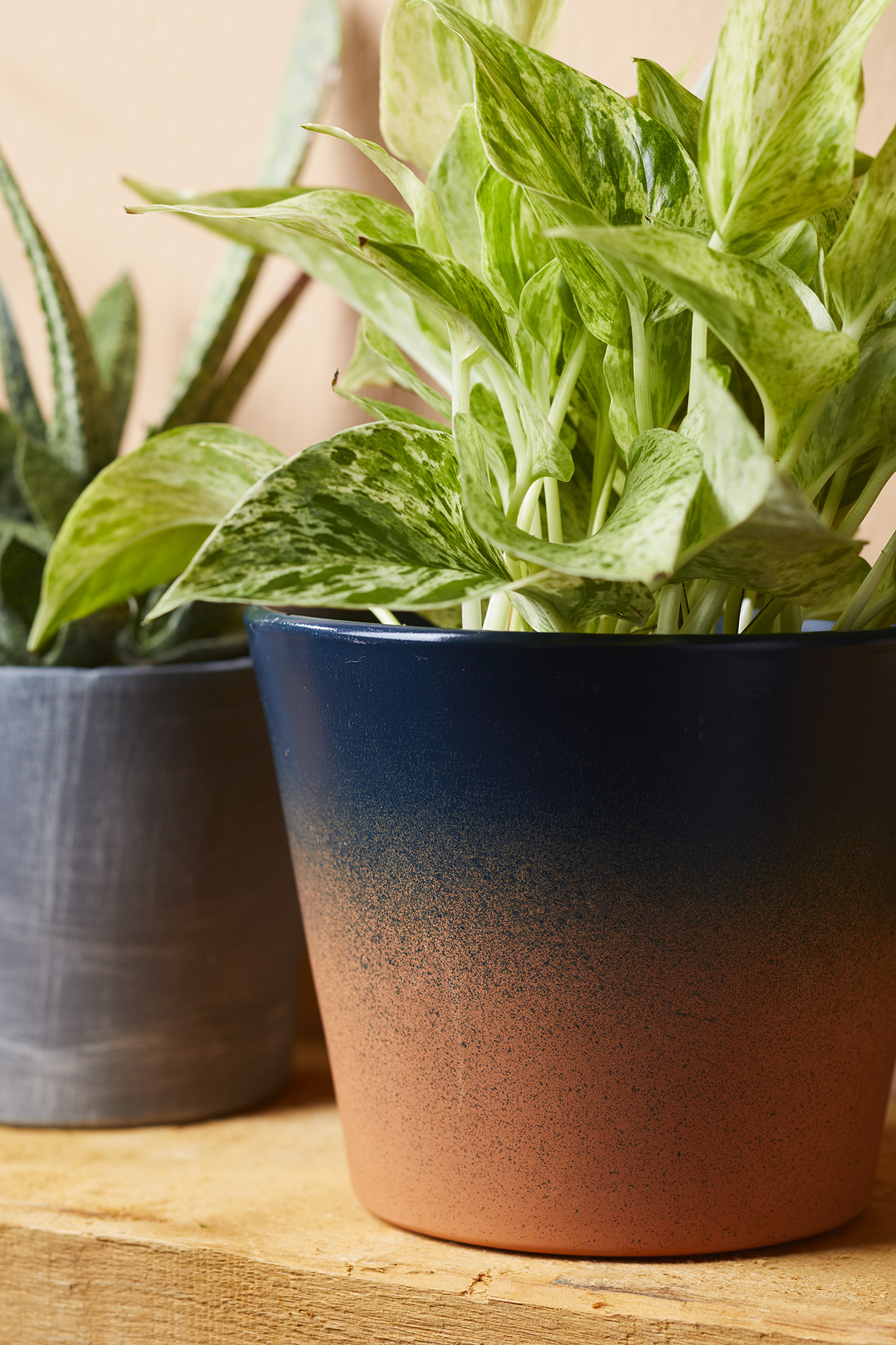 Pothos plant in ombre blue and orange terra-cotta pot on a wooden shelf