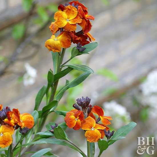 fire king wallflower