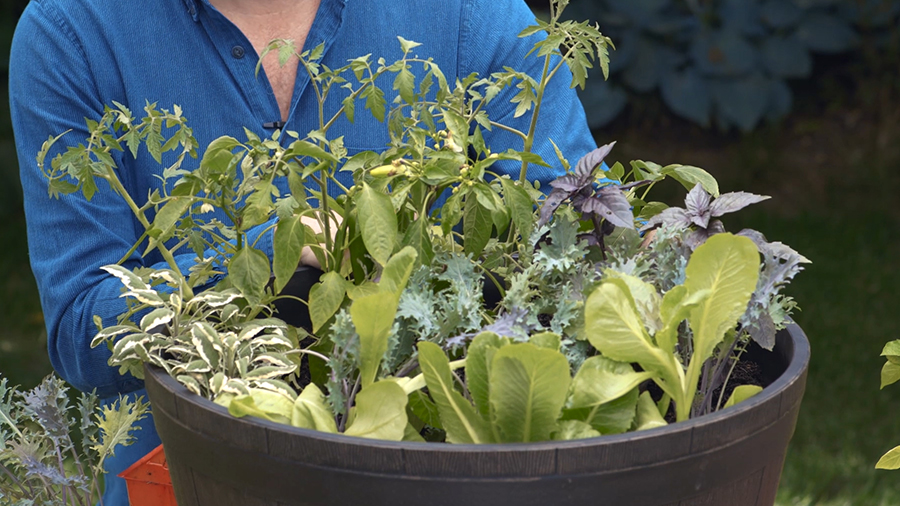 Growing Vegetables In Containers, How To Start Container Gardening
