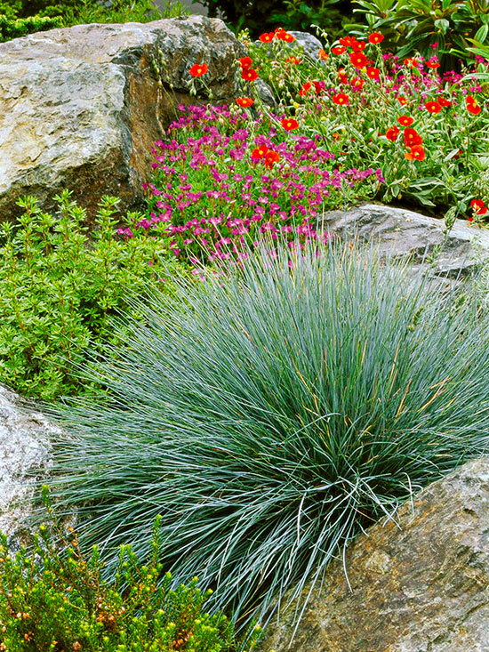 Ornamental Grass 101