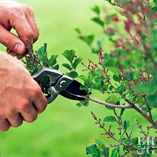 25 Gardening Tips Every Gardener Should Know