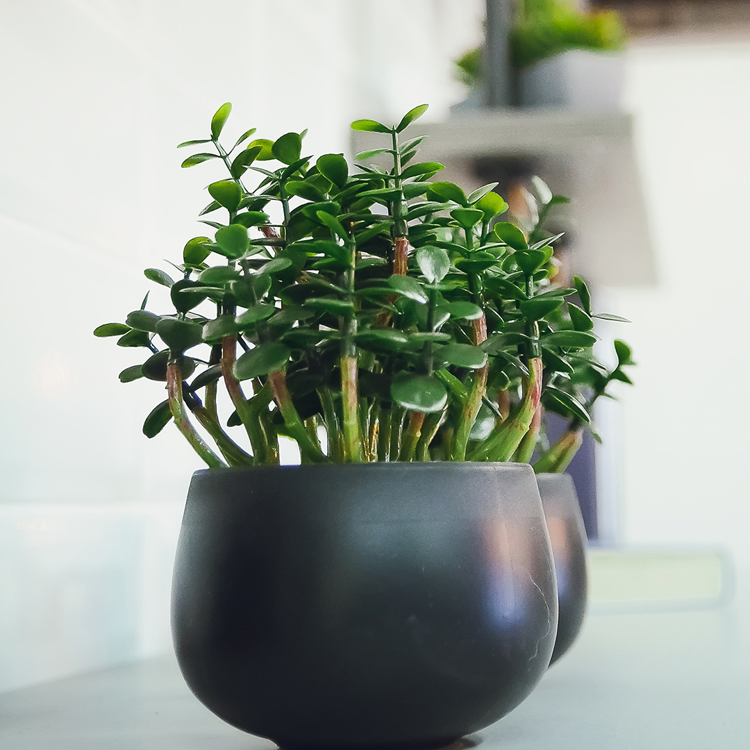 27 Easy Houseplants to Grow | Better Homes & Gardens Five Leaves House Plant on sage house plant, egg house plant, five leaves new york, five leaves vine, five leaves ground cover, five leaves poisonous plants,