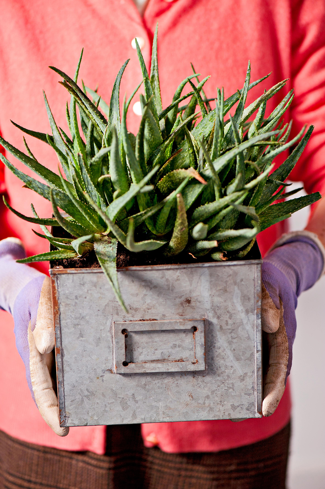 The 10 Best Succulents To Grow Indoors Better Homes