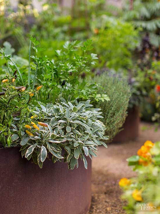 How to Grow Parsley, Indoors or Outside