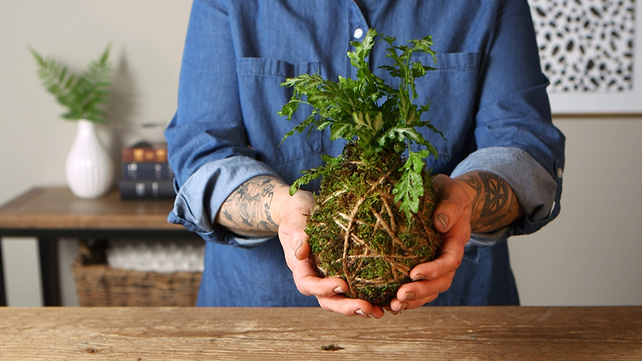 How to Make Kokedama