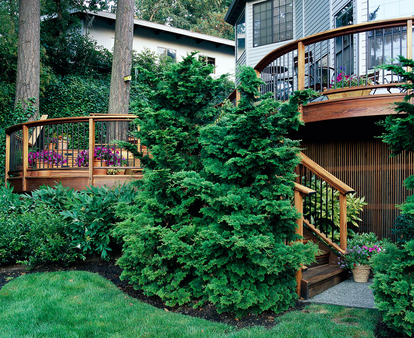 10 Outstanding Evergreen Trees For Privacy Better Homes