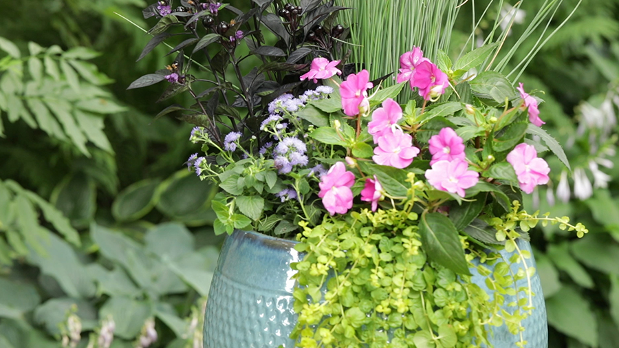 Heat-Tolerant Annuals That Bloom All Summer Long