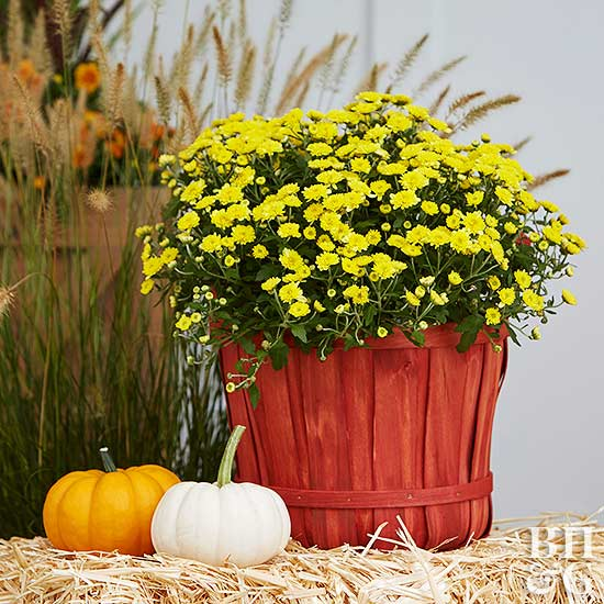 yellow fall flowers in red planter with mini pumpkins