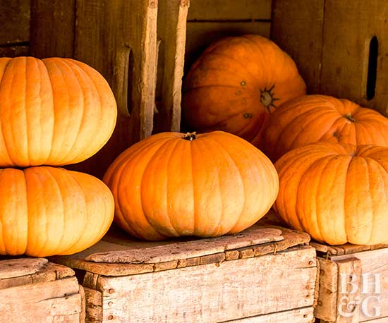 How to Pick the Best Pumpkin at the Patch