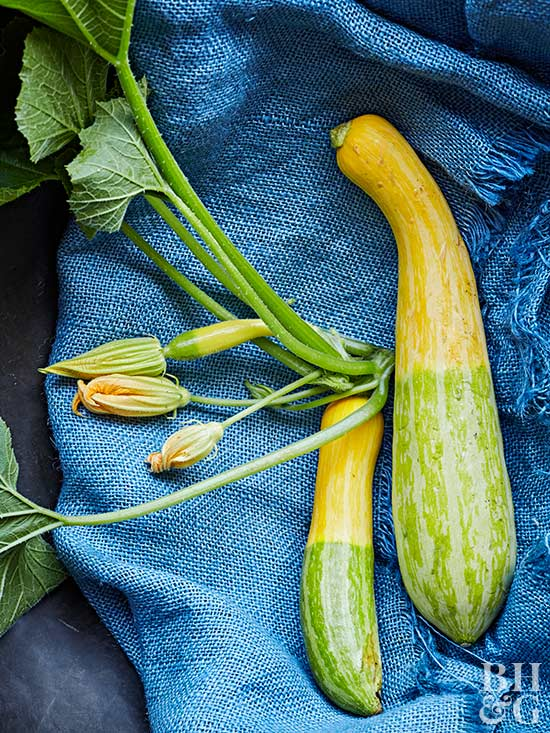 How to Grow Zucchini and Other Summer Squash