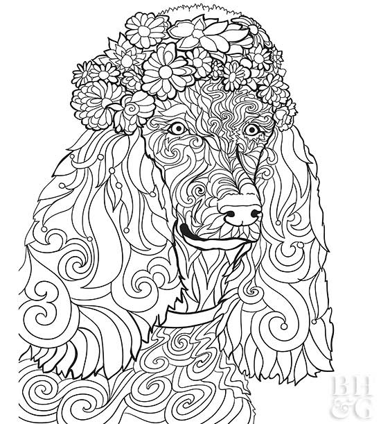 poodle dog coloring pages | Pet Coloring Pages | Better Homes & Gardens