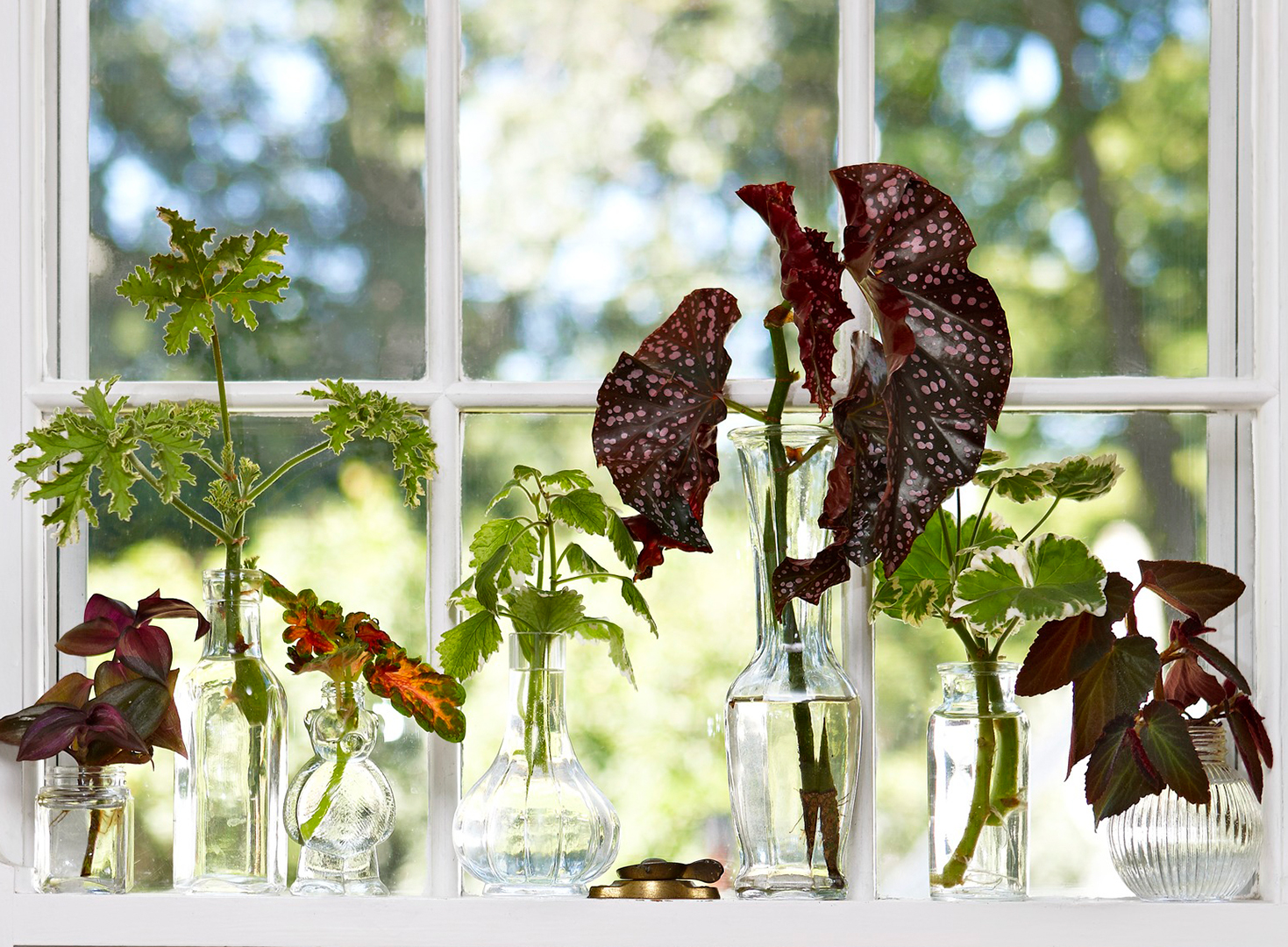 How to Grow Plants From Stem Cuttings