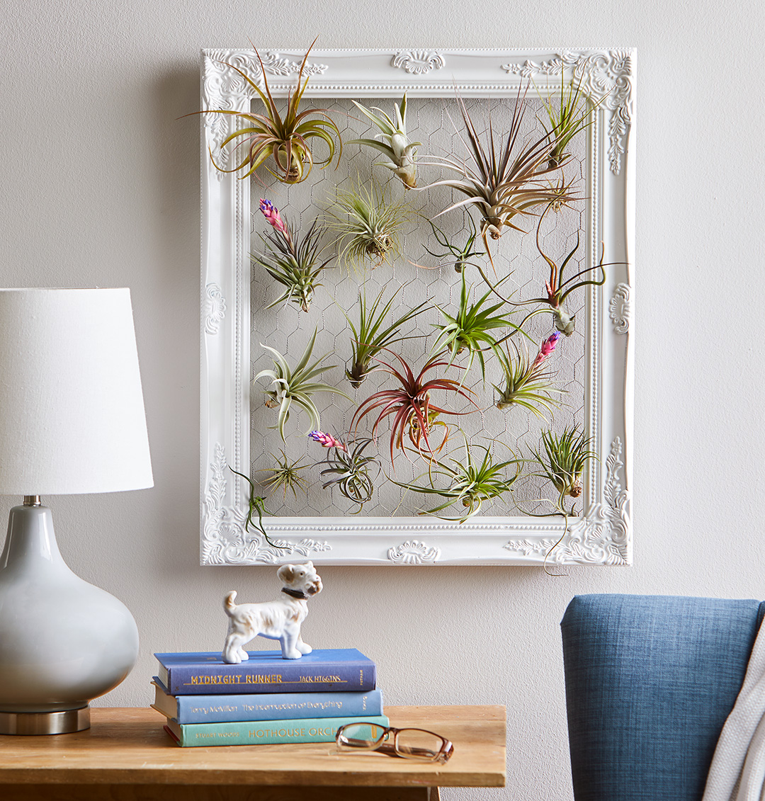 Air plant frame craft