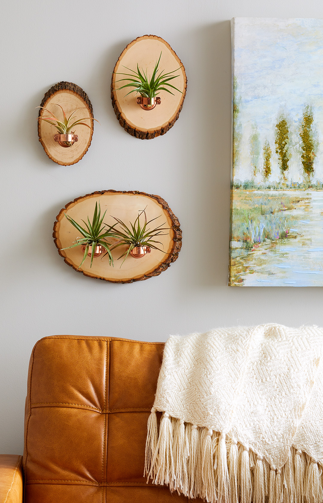 air plants displayed on wood slices