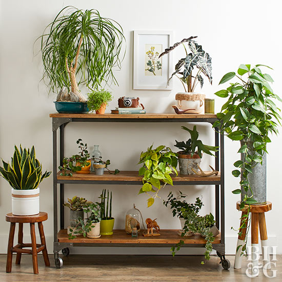 Various houseplants stools and shelves