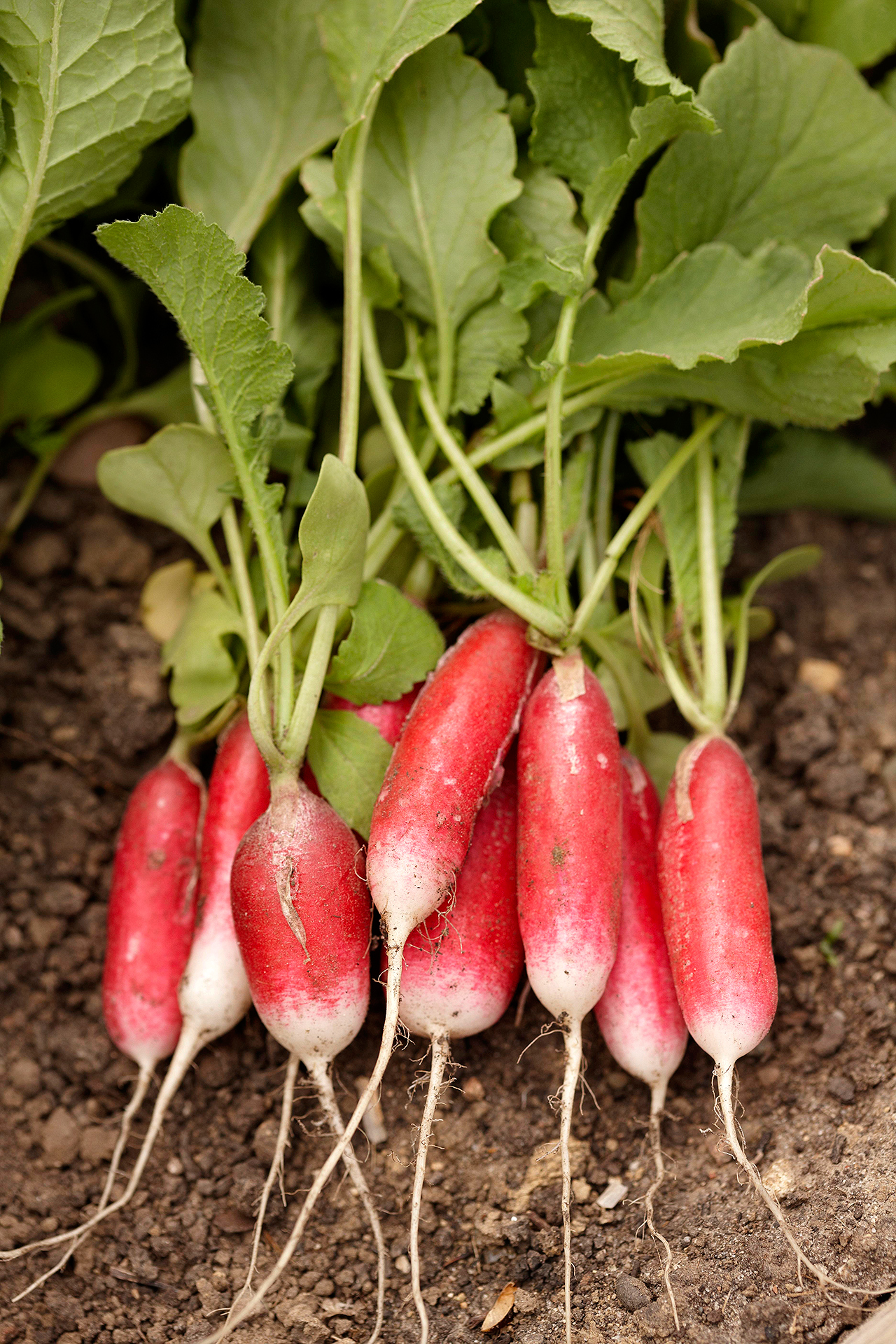 Easy and Fast-Growing Vegetables