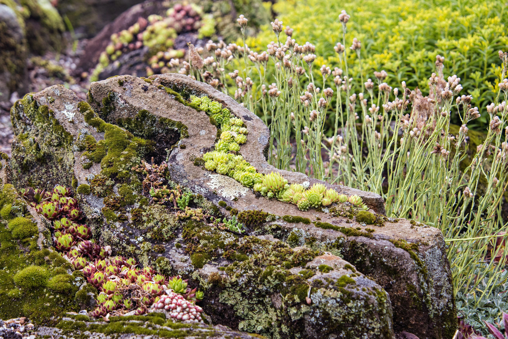 In A Succulent Rock Garden Design Carved Out Of Rock And Built On The Will  To Survive, Brandhorst And His Succulents Show Just How Tough And Adaptable  They ...