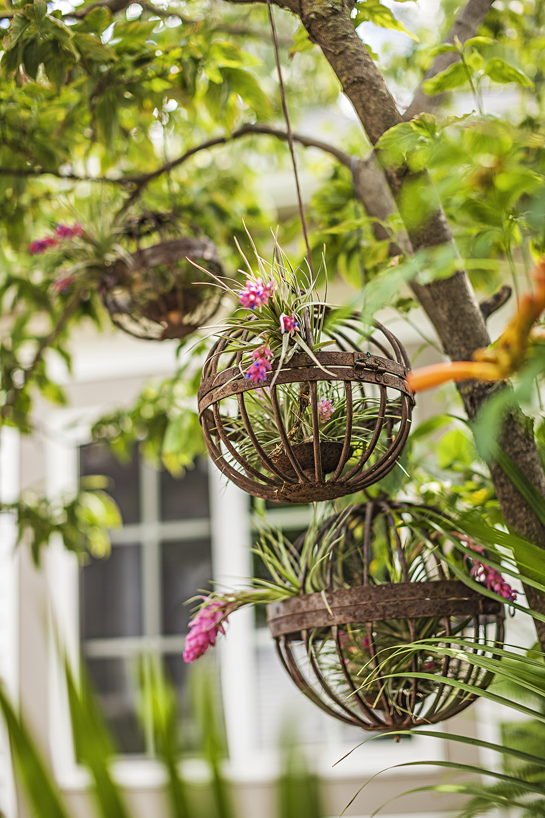 5 Stunning Air Plant Ideas