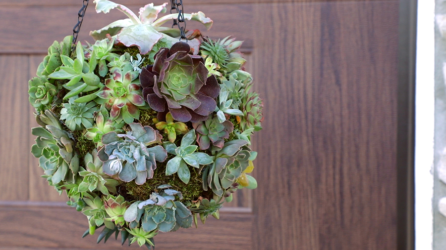 How to Make a Hanging Succulent Ball