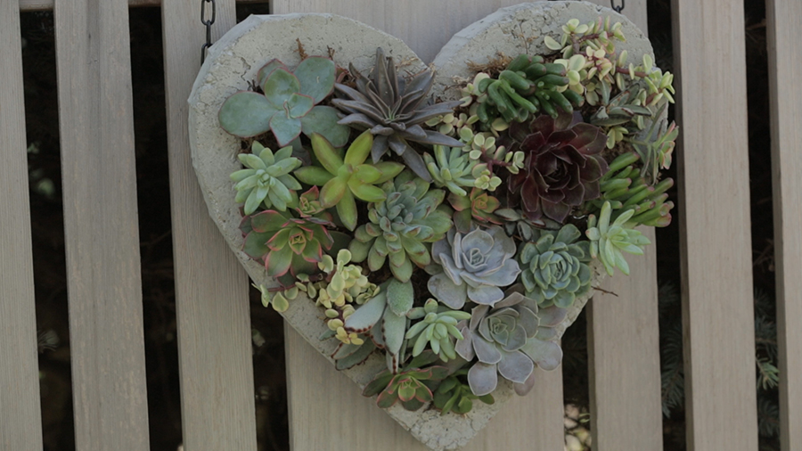 This DIY Concrete Wall Hanging is a Succulent Lover's Dream