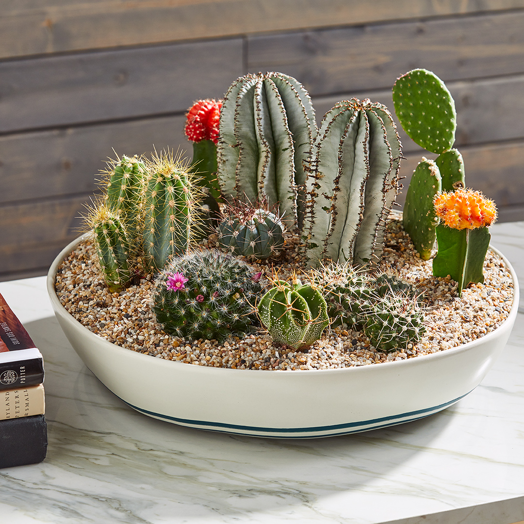 tabletop planter filled with mini cacti