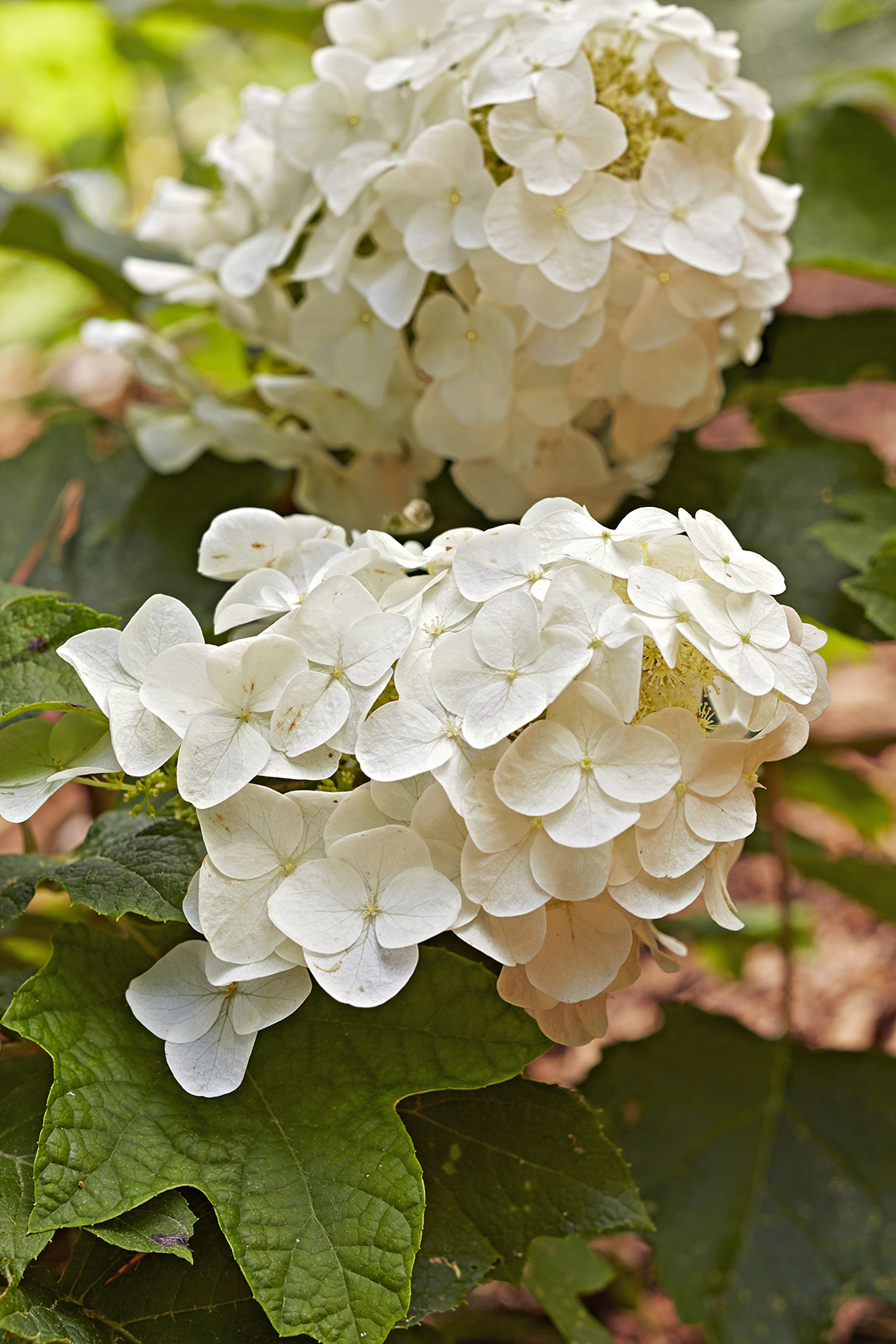 flower petals in white bunches