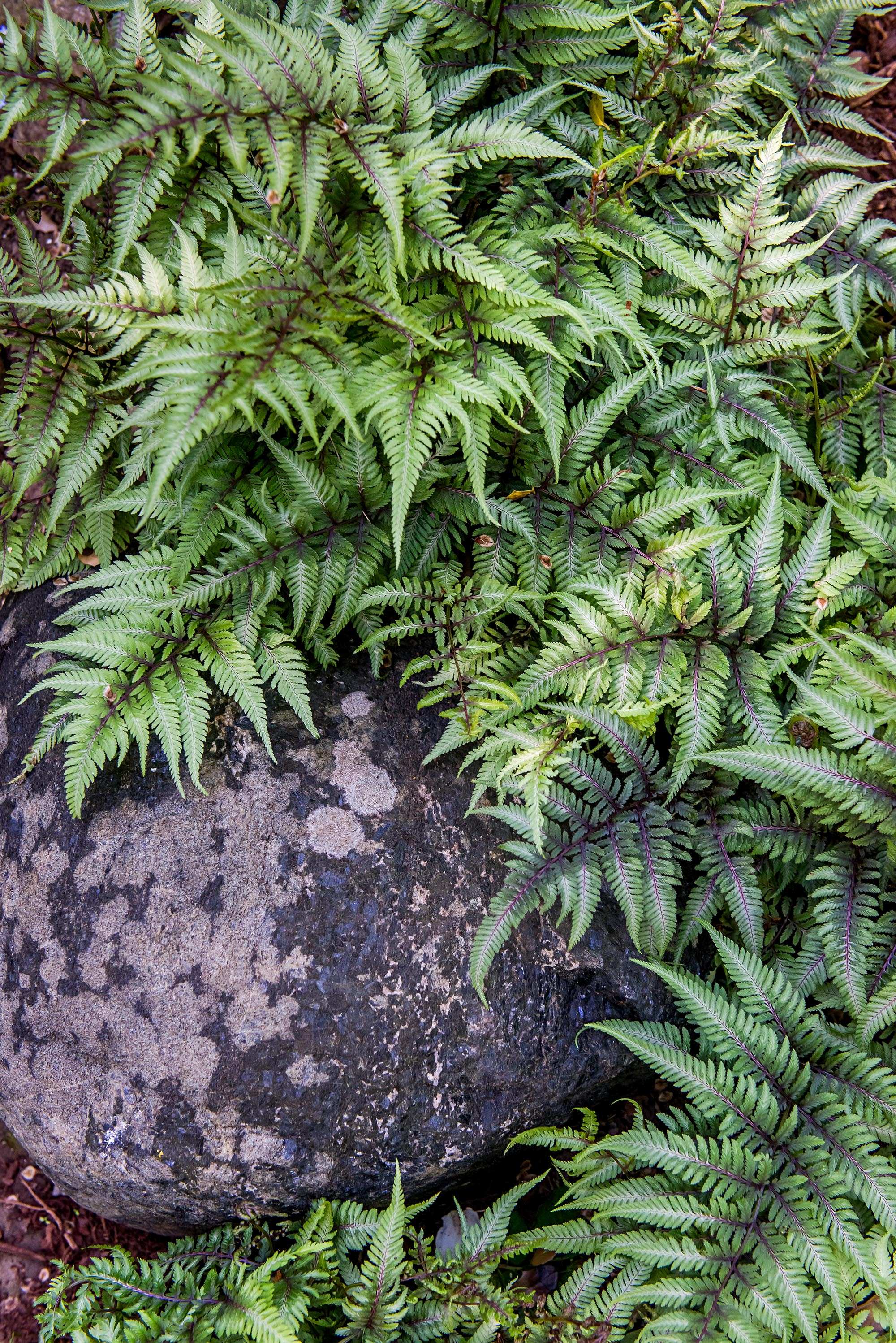 Learn How to Care for Outdoor Ferns With This Guide