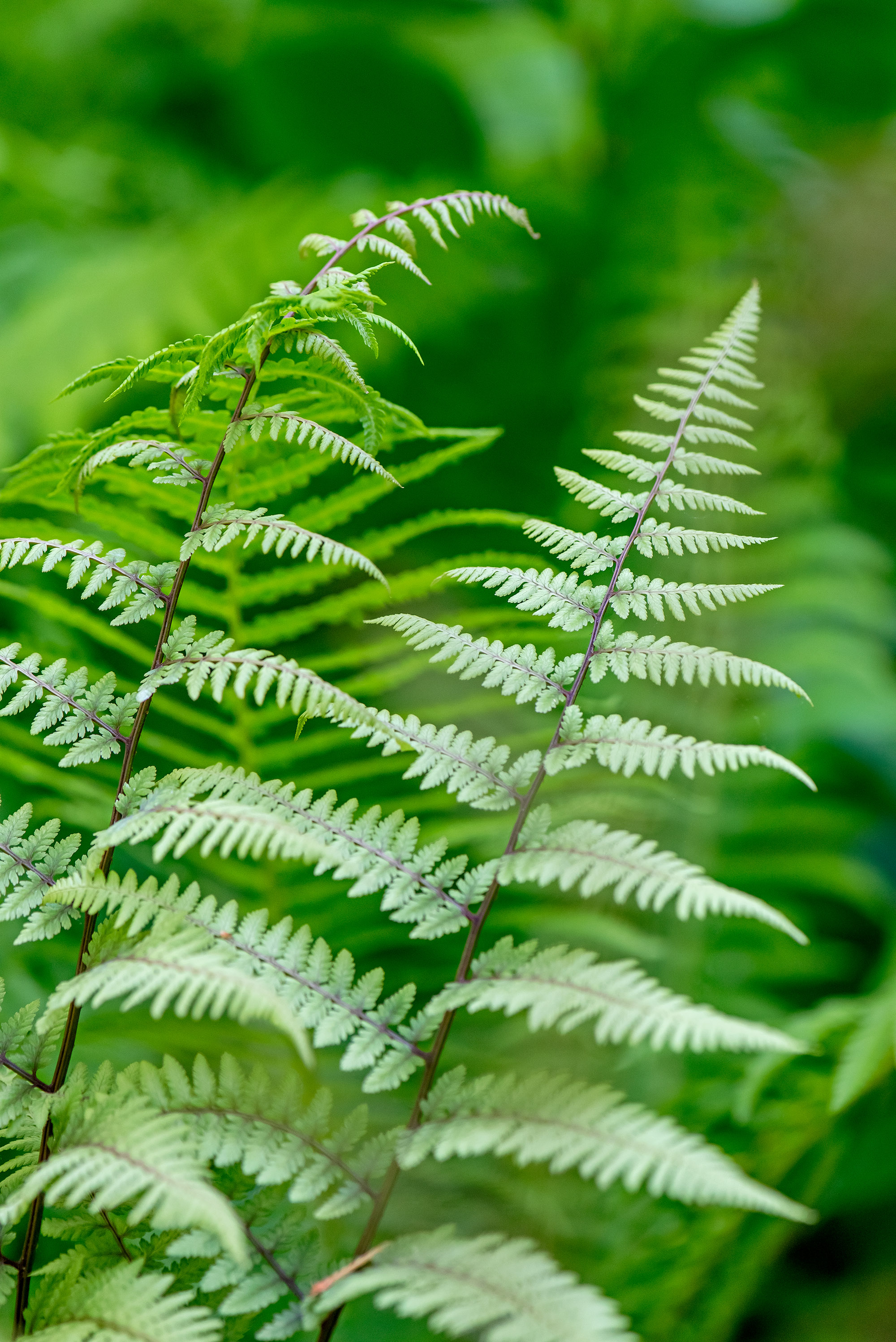 This Gorgeous Fern Garden Shows That These Plants Aren't Just Fillers