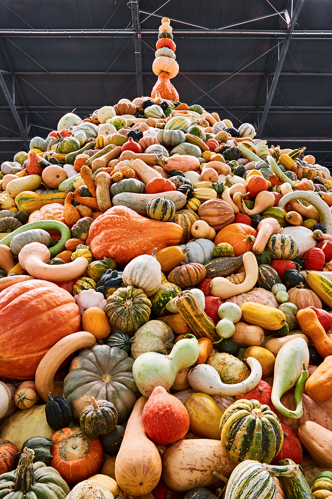 The National Heirloom Expo is the Ultimate Pumpkin Destination