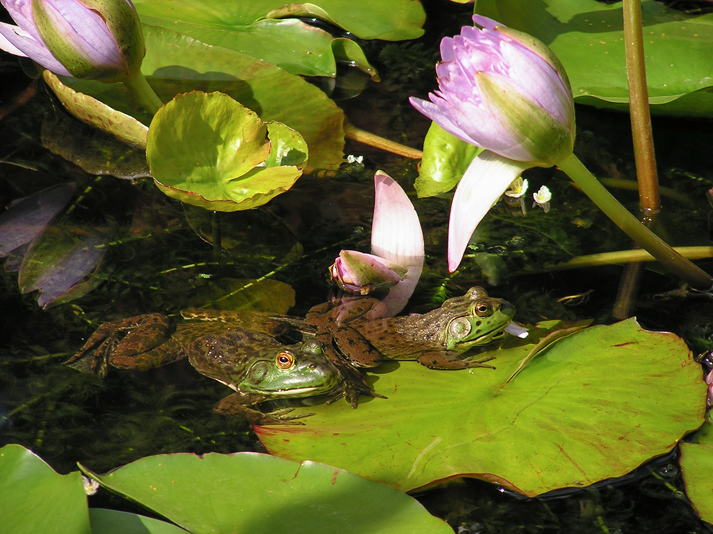 Visitors You May Find in Your Wildlife Pond