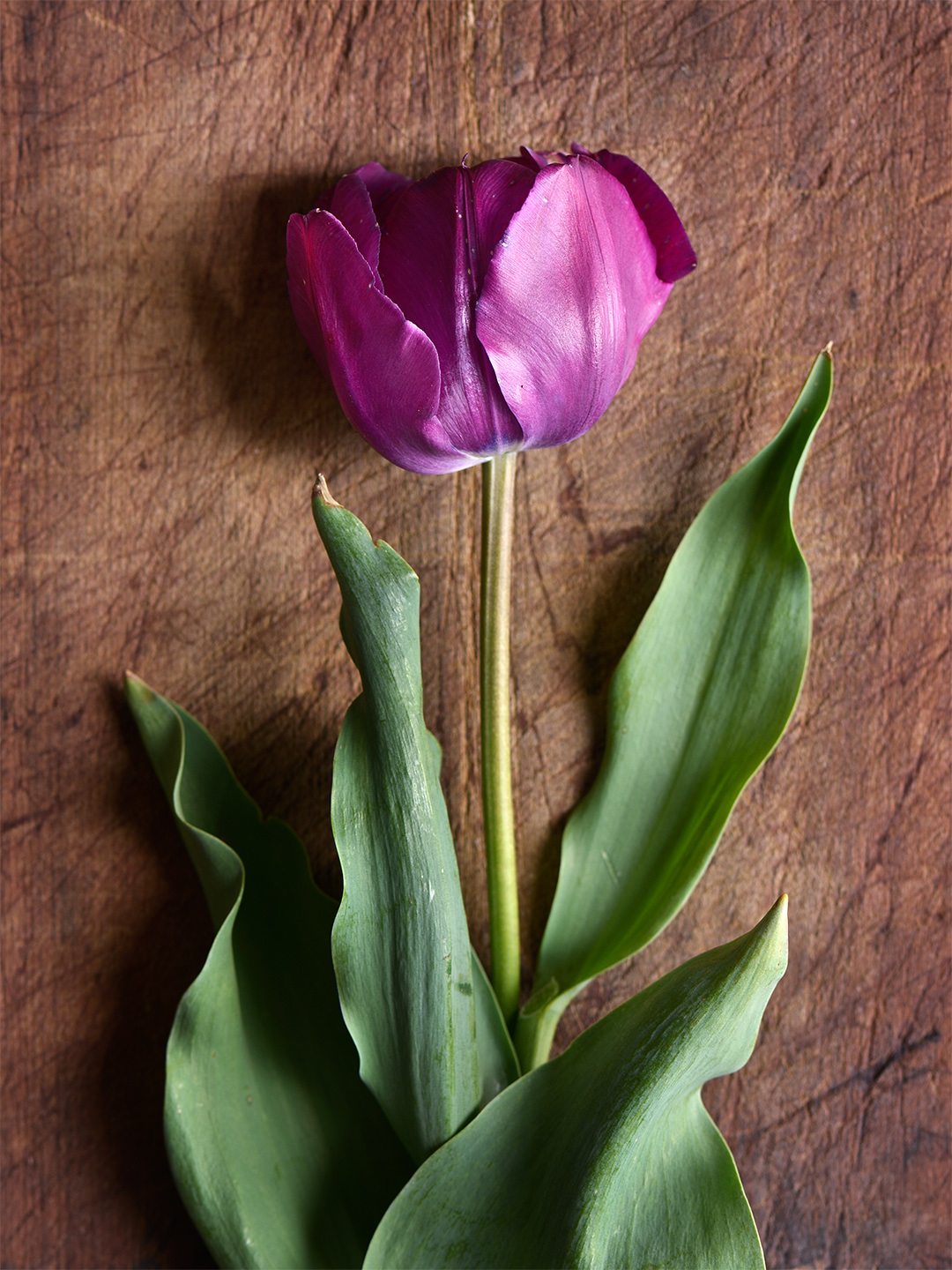 12 Beautiful Types of Tulips to Plant in Your Garden