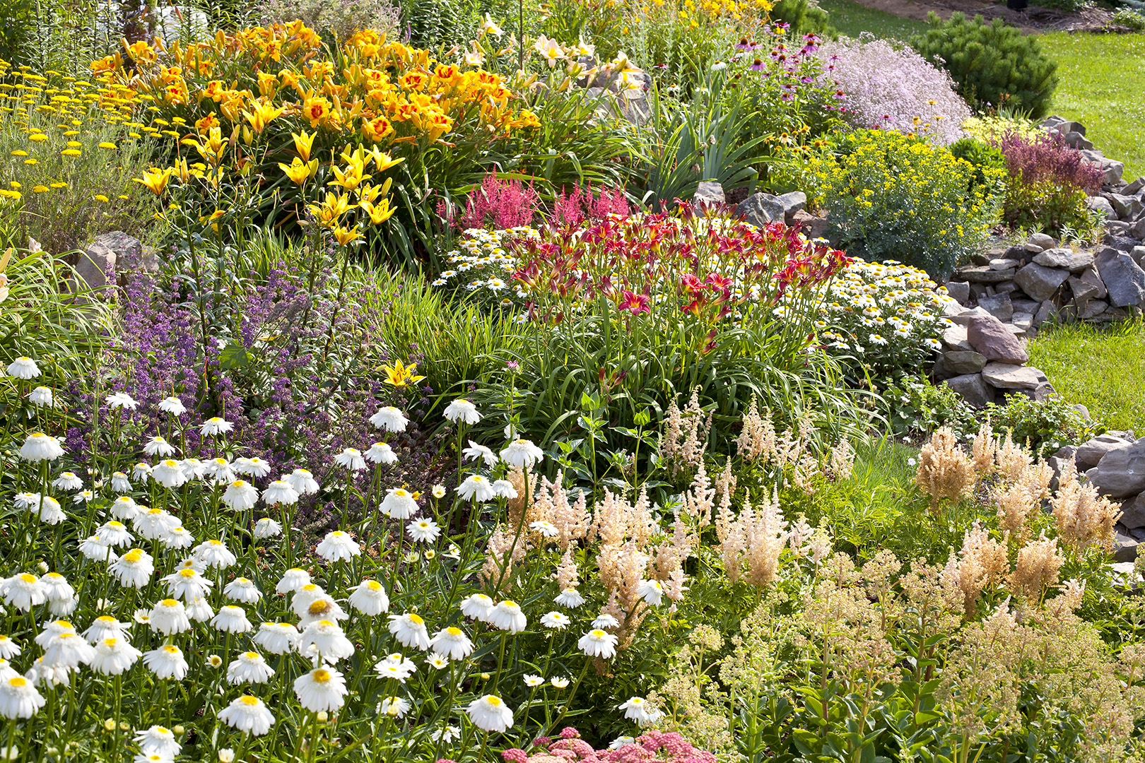 perennial bed with daylily and astilbe flowers